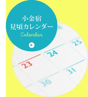 小金宿見頃カレンダー